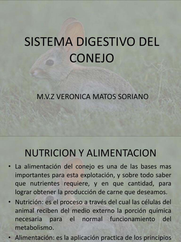 Anatomia Conejo. Diseccin De Un Conejo. Excellent Anatoma Interna ...