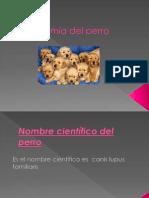 taxonomia del perro