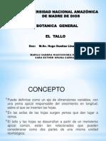 Diapositiva de Tallo
