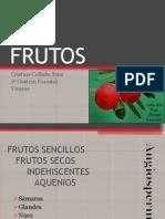 Archivo fotográfico tipos de frutos