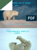 Osos-polares-