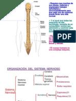 sistema endocrino3