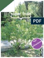 MAQUI, EL SUPERFRUTO CHILENO