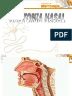 Anatomia Nasal
