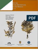 algas ( macro algas y micro algas )
