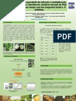 poster  phytopathology conference brazil 2008