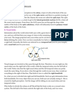 Basic Visual Pathways