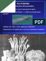 Zoologia 1 Porifera A