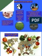 MEJORAMIENTO GENETICOS EN PLANTAS