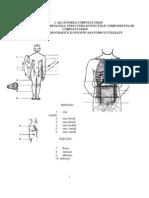 42282752 Manual Anatomie