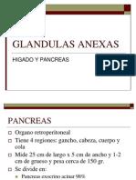 Glandulas anexas.