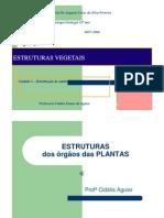 b 2.13.Estruturas Vegetais
