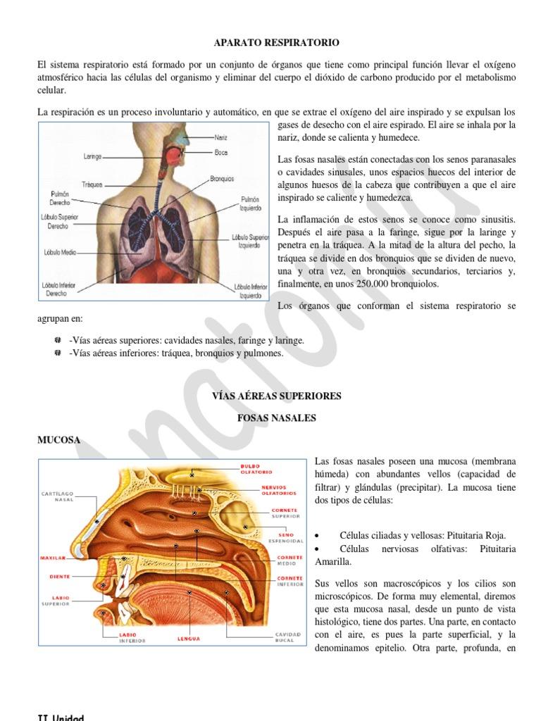 Increíble Colocación De órganos En El Cuerpo Humano Friso - Anatomía ...