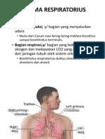 Sistema Respiratorius