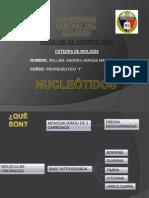 nucleotidos