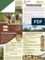 Folleto Final Reforestacion Ingles
