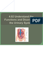 4 02 understand the functions and disorders of the urinary system