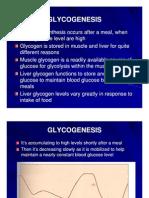 Mbs127 Slide Glycogenesis