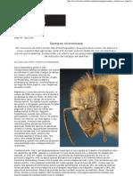 Campos Silenciosos - Scientific American Brasil