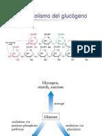 Metabolisme Glucogen Lehninger
