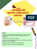 Histologia Del Aparato Respiratorioinf