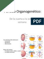 Período Organogenético