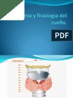 Anatomia y Fisiologia Del Cuello