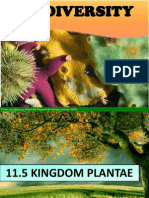11.5 Kingdom Plantae-Bryophytes Pteridophytes 1 Hour .Pptnew