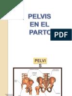 pelvis-110329125632-phpapp02