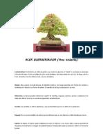 Ficha de Mantenimiento - Acer Buergerianum