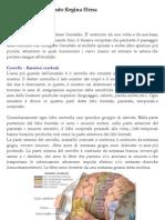Cervello Neurochirurgia