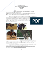 Equine Biomechanics