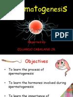 Spermatogenesis-eduardo Cabalang Jr.