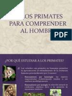 T1.Los Primates Para Comprender Al Hombre