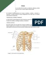 Anatomía de Torax