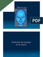 Cours d'Anatomie Anatomie Gorge Et Larynx