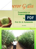 Emperor Grass Presentation