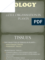 Cell Organisation in Plant