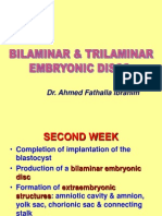 _Bilaminar & Trilaminar Discs