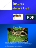 insects_in_out.ppt