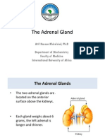 The Adrenal Gland, Catecholamine Synthesis