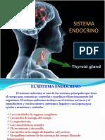 Carlos Sistema Endocrino