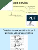 Raquis Cervical Rosario[1]