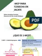 1 MCP Aguacate