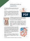 Tema 18. Introducción al aparato digestivo