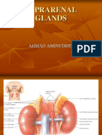 suprarenal glands
