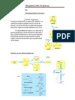 8 Met. de glucosa.pdf