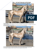 Akhal Teke – cei mai frumoşi cai din lume