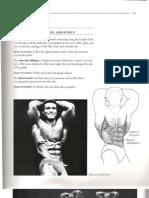 Arnold Schwarzenegger-Bodybuilding Encyclopedia-