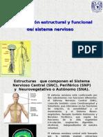 Organizacion Estructural y Funcional del sistema Nervioso
